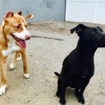 Hounds Town Island Park Rescue Pup Needs a Home