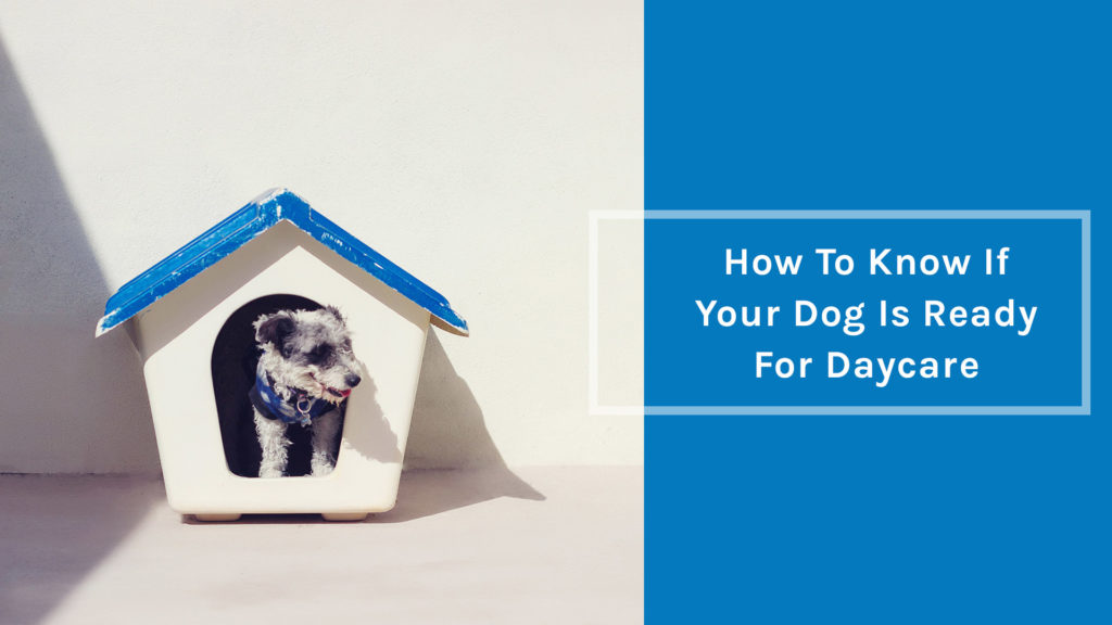 How to know if your dog is ready for daycare
