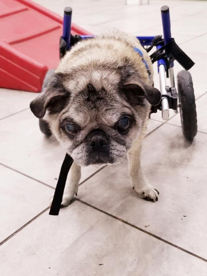 Disabled Dog Welcomed at Doggie Daycare in Farmingdale