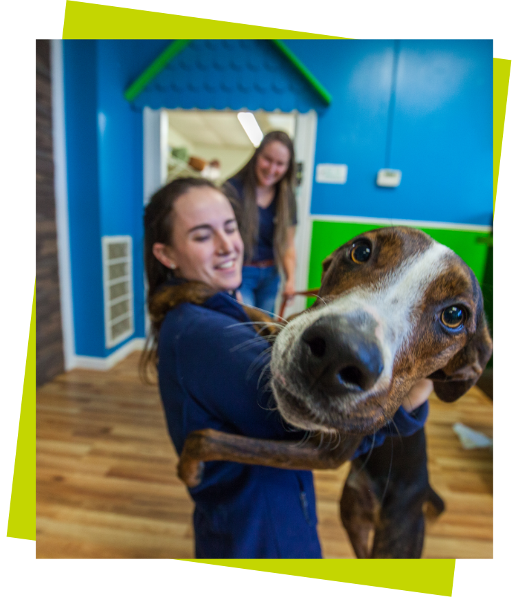 brown dog hugging a staff member with face focused and green background